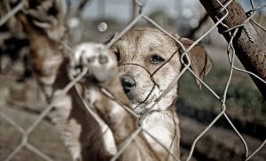 Tierquälerei bei Hund