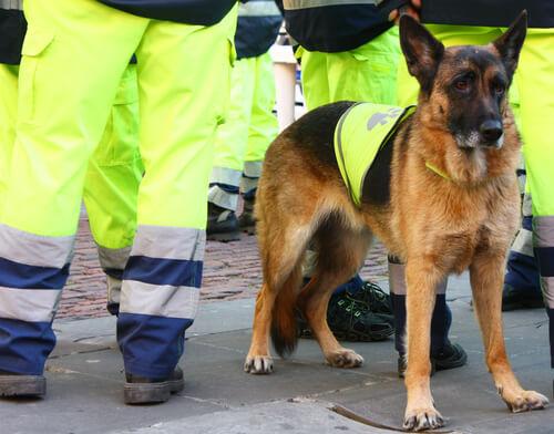 Atila, Spaniens bester Rettungshund ist tot