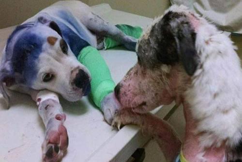 Freundschaft zwischen zwei misshandelten Hunden