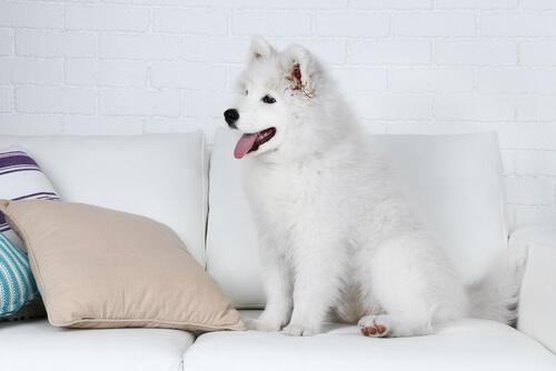Hund sitzt auf Sofa