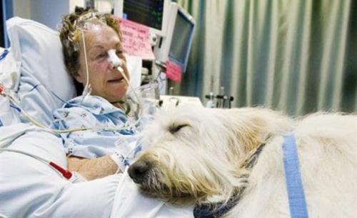 Ein Krankenhaus in Kanada erlaubt Tierbesuche