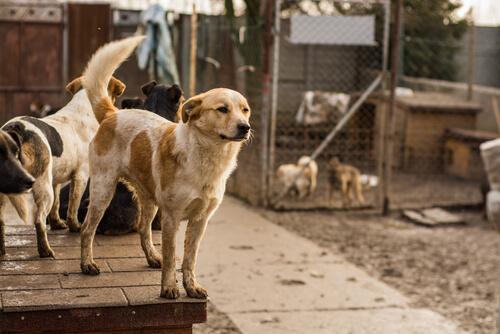 Hunde im Tierheim