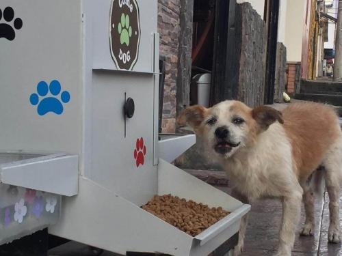 6000 Hunde profitieren von ComeDog