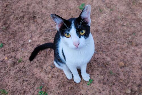 Katze besucht Grab seines Besitzers