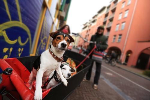 Holland, ein Land ohne Straßenhunde