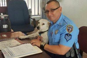 Ein streunender Hund wird Polizist