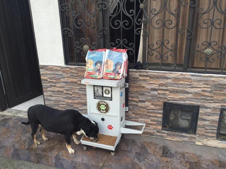 Straßenhunde fressen mit ComeDog
