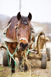 Pferd und Tierquälerei