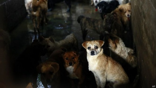 Mischlingshunde im Tierheim