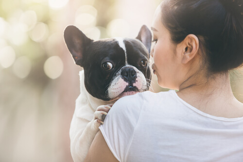 Brief eines adoptierten Hundes an seine Herrin
