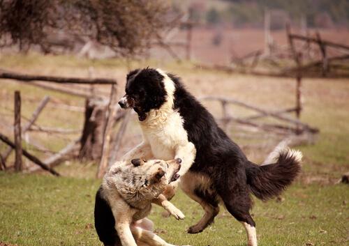 Die Ursache für Aggressivität liegt nicht allein beim Hund
