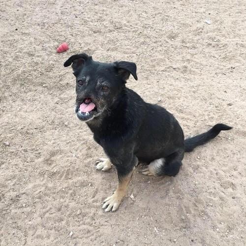 Der Hund Anubis reist 11000 km für ein neues Zuhause!