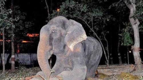 Tierquälerei an einem Elefanten