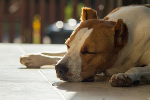 Erbrechen beim kranken Hund