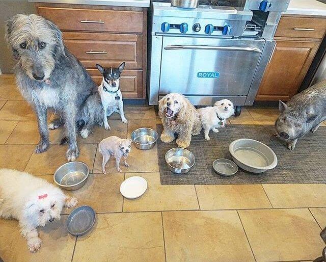 Adoption und Ernährung
