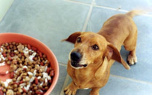 Kombination verschiedener Futterarten ist für Hund gefährlich