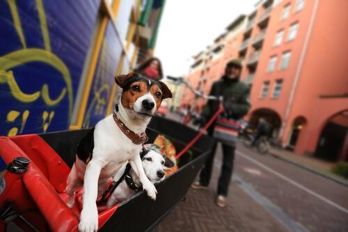 Weiseheit eines Straßenhundes