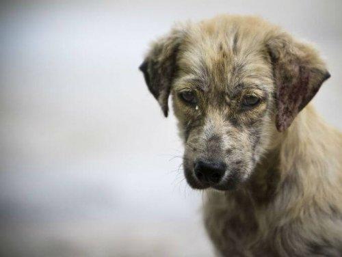 GoPro filmt das Leben eines streunenden Hundes