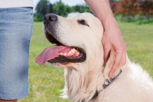 Hund mit Besuch