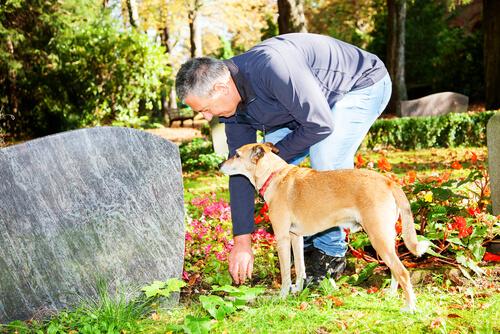 Trauer um ein Haustier