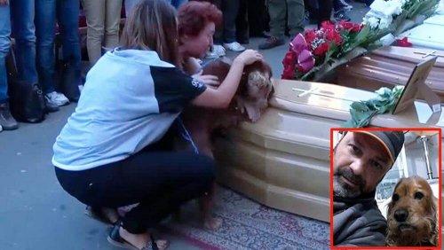 Die Treue eines Hundes über den Tod seines Besitzers hinaus