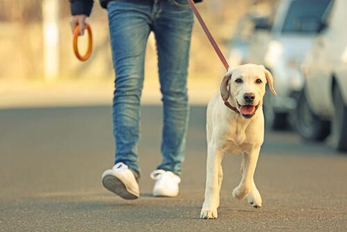 Hundebesitzer mit seinem Vierbeiner