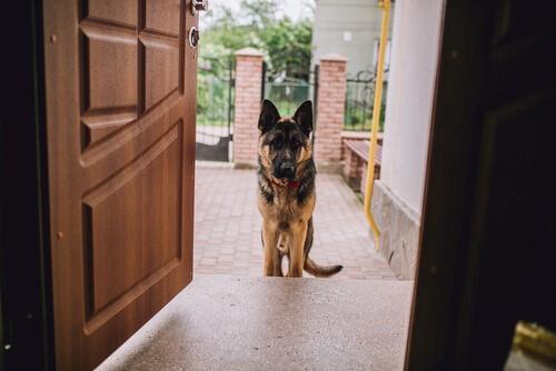 Was tun, wenn sich Haustiere bei Besuch schlecht benehmen?
