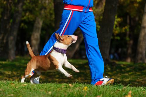 nervösen Hund beim Spaziergang beruhigen