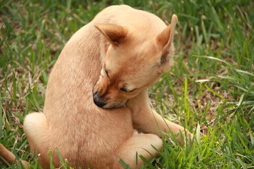 Notsignale bei Hunden: Kratzen und Lecken