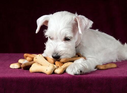 Was deinem Hund das Herz bricht