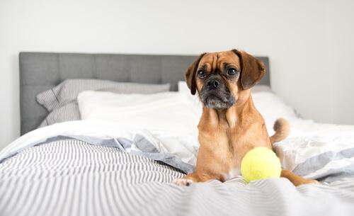 ich liebe meinen Hund wie verrückt, auch wenn er im Bett sitzt