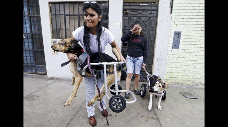 Tierheim für Hunde mit Behinderung