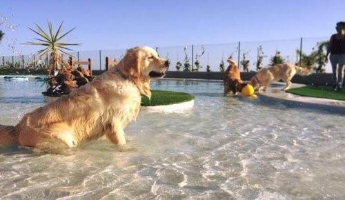 Teneriffa eröffnet das luxuriöseste Hotel für Hunde und Katzen in Europa
