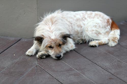 Woran merkt man, dass ein Hund krank ist?