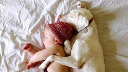 Baby hilft Hündin, ihre schreckliche Vergangenheit zu überwinden