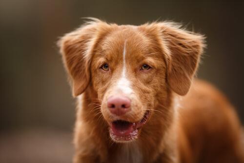 Warum den Hund nicht für sein Bellen bestrafen?