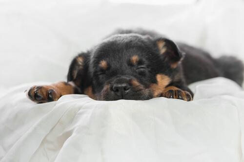 Schlafpositionen junger Hunde
