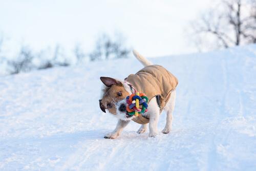 Warum schütteln Hunde ihre Spielsachen?