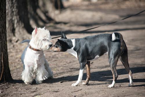 4 Dinge, vor denen Hunde Angst haben