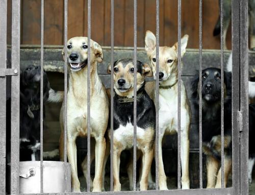 Südkoreaner sollen kein Hundefleisch mehr essen!