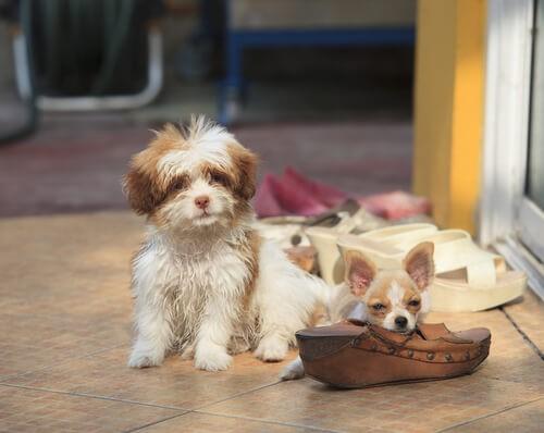 brich deinem Hund das Herz nicht