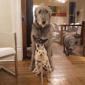 Adoption von Hunden