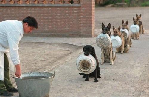 16 Hunde warten auf Futter