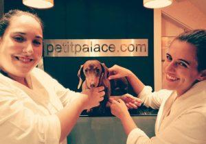 Hotel für Hunde und Katzen in Teneriffa