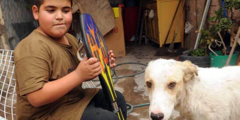Hund mit Freund und Skateboard