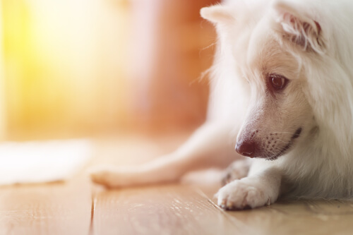Kastration von Hunden