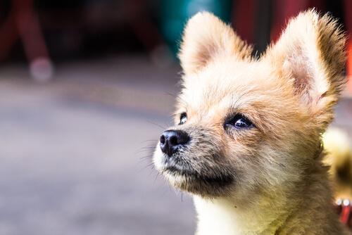 Die Kastration Von Hunden Vor Und Nachteile
