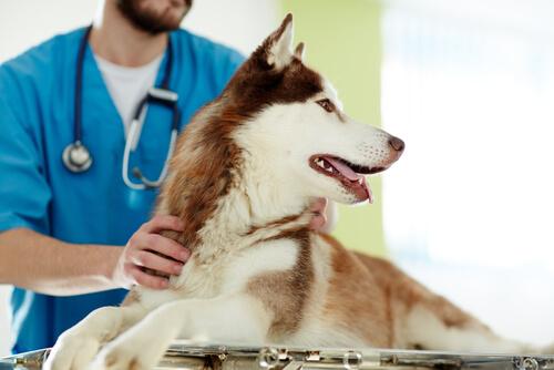 Die Kastration von Hunden: Vor- und Nachteile