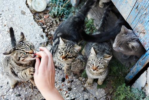 Katzen auf der Katzeninsel