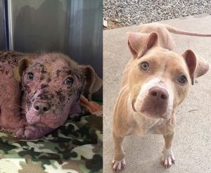 Kooki vor und nach der Behandlung